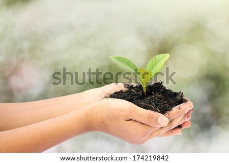 woman hand holding a little green tree plant,isolate on white background - stock photo
