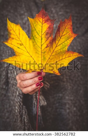 Woman hand holding and showing red dry leaf