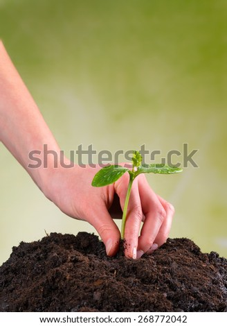 Woman hand seeding young plant into pile of soil - stock photo