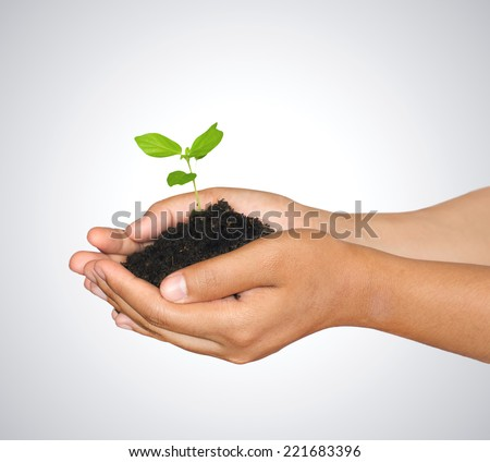 Woman hands holding green sprout with soil ,isolate white background - stock photo