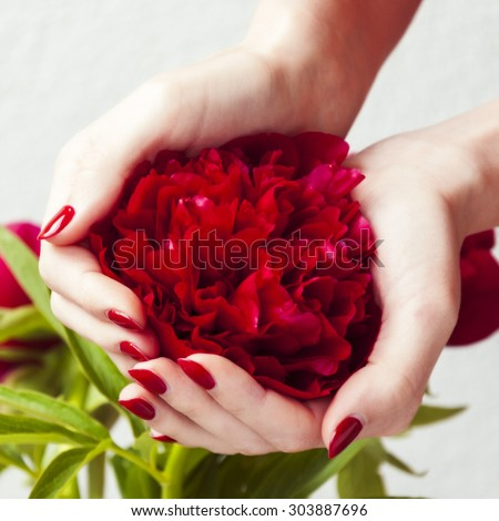 woman hands holding red peony