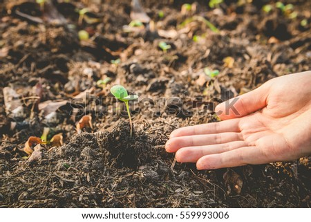 Woman hands planting the young tree while working in the garden, New life growth ecology concept