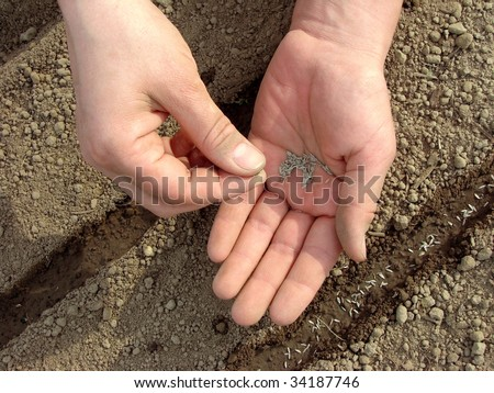 woman hands sowing seeds