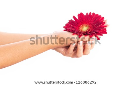 Woman hands with french manicure holding red flower close-up - stock photo