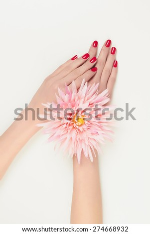 Woman hands with manicure holding pink flower.artificial flowers - stock photo