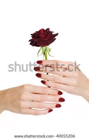 Woman hands with red manicure holding red rose - stock photo