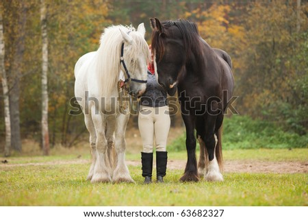 Woman having fun with two shire horses - stock photo