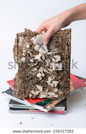 woman hold a book has been damaged by termite - stock photo