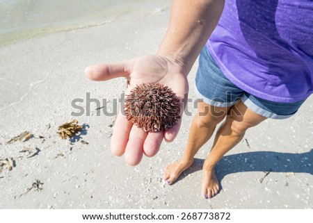 Woman Holding a Dead Sea Urchin - stock photo