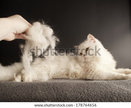 Woman holding a pile of cat hair in front of a cat
