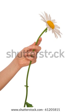 woman holding big white daisy in the hand - stock photo
