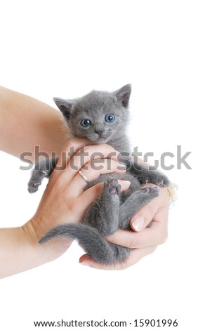 Woman holding cute British kitten