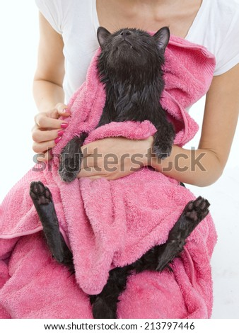 Woman holding Cute gray soggy cat after a bath, drying off with a pink towel - stock photo