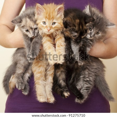 Woman Holding Four Kittens - stock photo