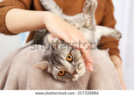 Woman holding lovely grey cat, close up - stock photo