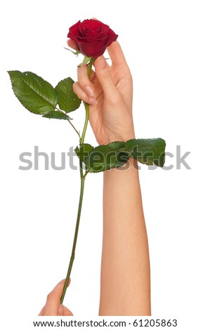 woman holding red rose in the hands as a gift