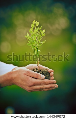 woman holding young plant in her hands. shallow depth of field - stock photo