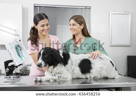 Woman Looking At Border Collie While Standing By Vet - stock photo