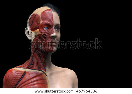 woman muscular anatomy isolated , 3d render of the face neck and chest , medical image reference
