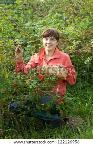 Woman picking briar in plant - stock photo