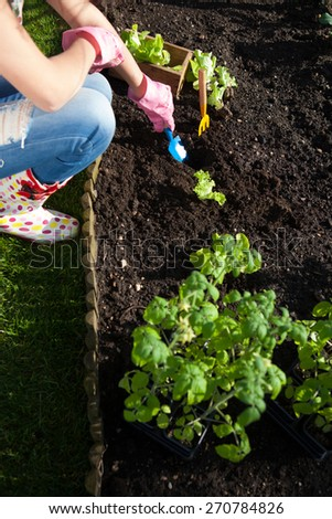 Woman planting lettuce , gardening concept - stock photo