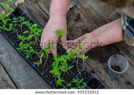 Woman planting seedlings in cups