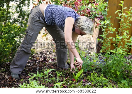 Woman pulling the weeds at the front garden.