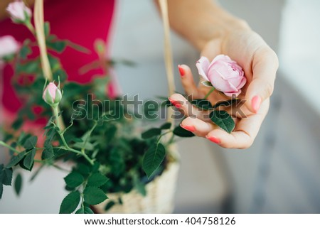 woman's hand gently a flower roses - stock photo