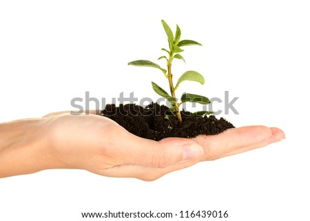 woman's hand holding a plant growing out of the ground, on white background close-up - stock photo