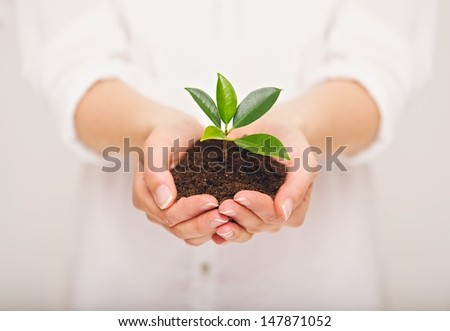 Woman's hand holding young plant, ecology concept