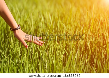 Woman's hand touching new born wheat ears at sunset  - stock photo