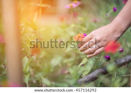 Woman's hand with a flower