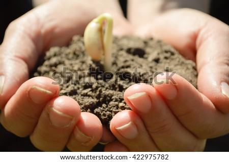 woman's hands holding a plant growing out of the ground, closeup.Green seedling growing from soil  outdoors,Ecology concept., World Environment Day, Earth Day, World food day concept.Hope, New Life