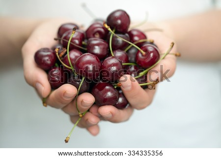 Woman's hands holding ripe cherries. Shallow dof - stock photo