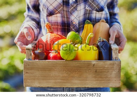 Woman's hands holding wooden crate with fresh organic vegetables from farm - stock photo
