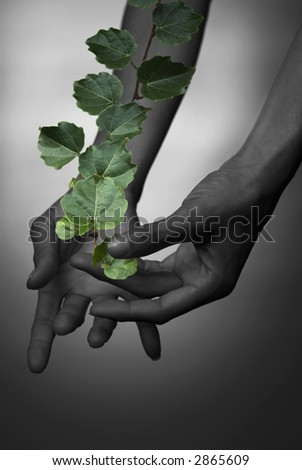 Woman's hands with the twig of ivy, collage. - stock photo
