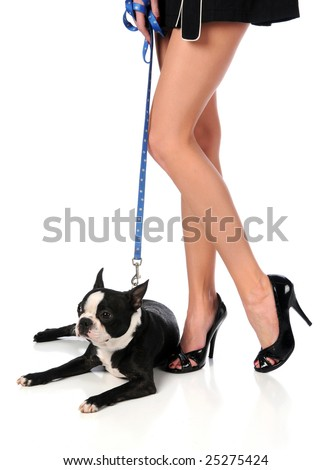 Woman's legs with high heels and Boston terrier dog over white background - stock photo