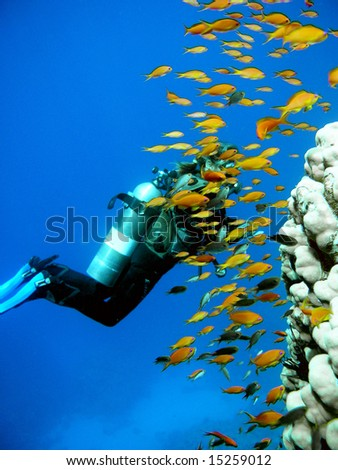 Woman Scuba Diver and school of Fish - stock photo