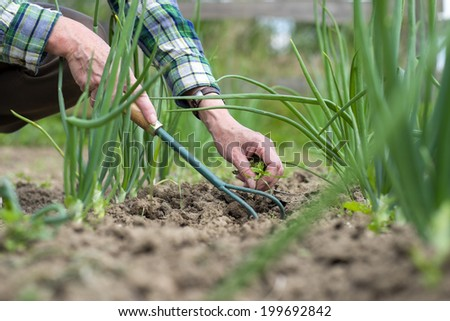Woman senior gardening with tools outdoors - stock photo