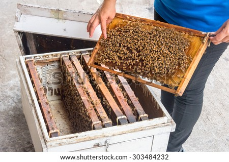 woman showing bees in the hive and Honeycomb at Rayong Thailand - stock photo