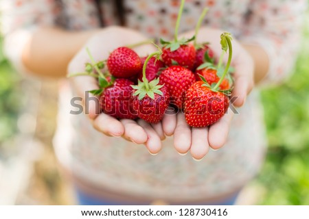 woman showing red strawberry on hands in farm - stock photo