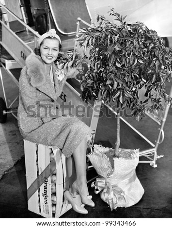 Woman sitting on a crate of oranges next to a plane and citrus tree - stock photo