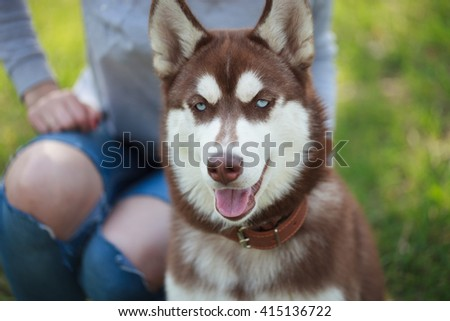 Woman sitting with her husky dog in green park outdoors. Funny fluffy mug with blue eyes. - stock photo