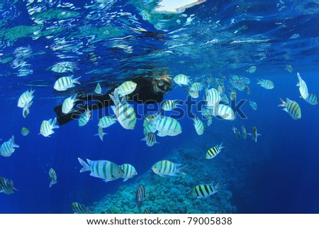 Woman Snorkels over Coral Reef with Tropical Fish - stock photo