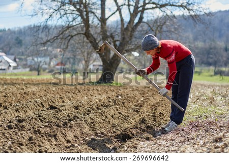 Woman sowing potato tubers into the plowed soil - stock photo