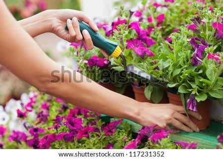 Woman spading flowers in the pot - stock photo