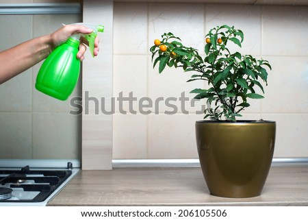 Woman spraying flowers in the kitchen - stock photo