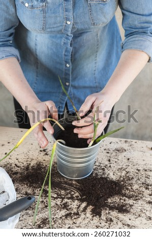 Woman taking soil to fill a potted plant