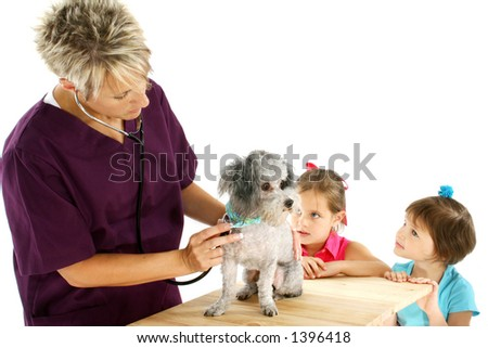 Woman veterinarian giving poodle a check-up while curious children look on - stock photo