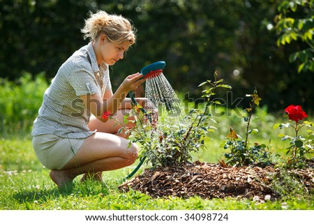 Woman watering rose plant with watering pot - stock photo